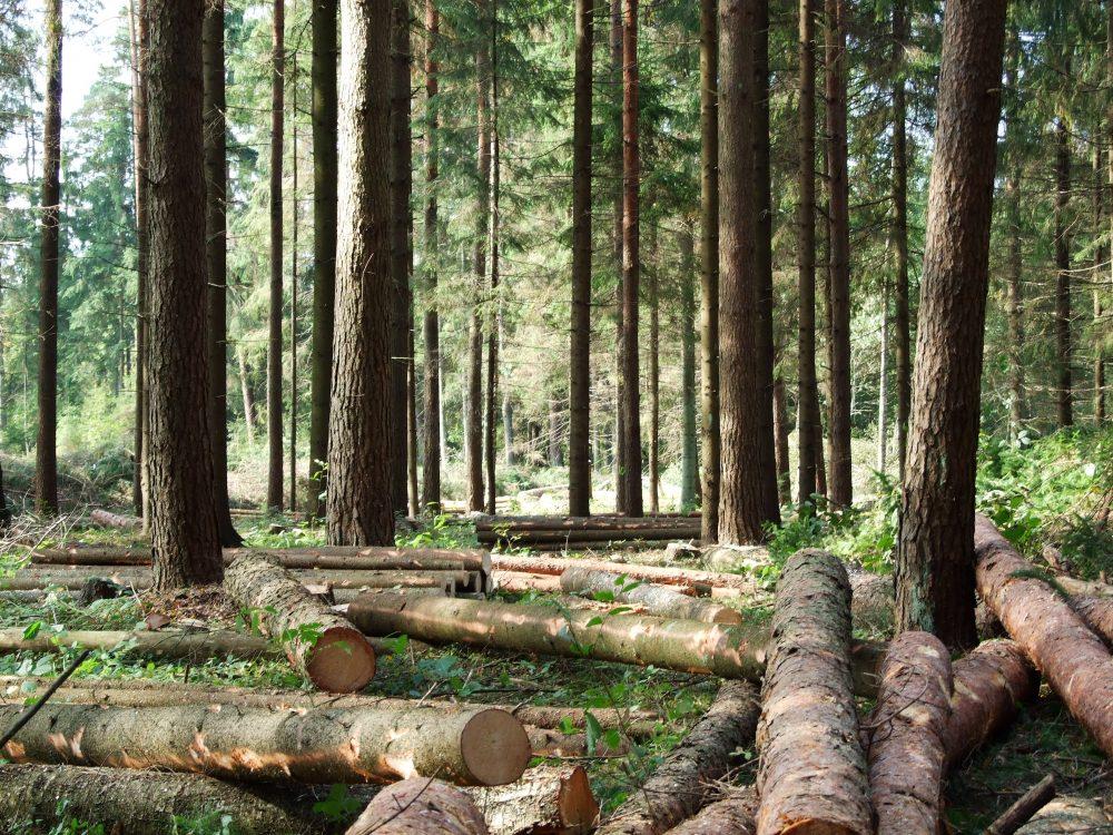 Krauzers mežstrāde